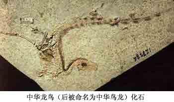 中国人重写地球生命进化史
