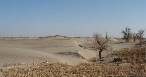 图:塔里木盆地枯死的胡杨仍与沙漠在继续抗争着