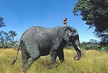 壁纸 大象 动物 马 骑马 360_245